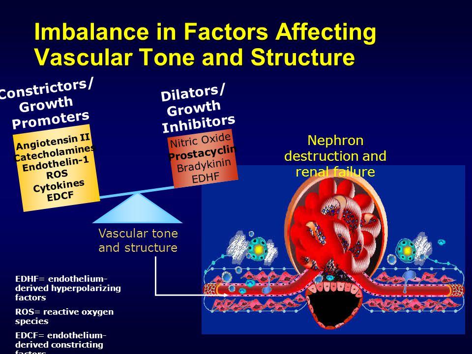 Υπέρταση και χρόνια νεφροπάθεια: Αιμοδυναμικές ανωμαλίες Mean BP Total Systemic Vascular Resistance = X Increased Cardiac Output Intravascular Volume