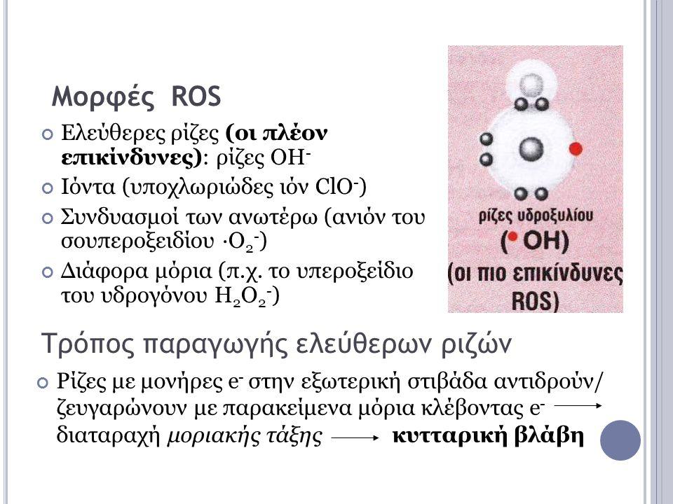 Πηγές παραγωγής ROS Διαρροή ενεργοποιημένου Ο 2 (ως ενδιάμεσου στην οξειδωτική φωσφορυλίωση) από μιτοχόνδρια Διαρροή e - στο Ο 2 με αντιδράσεις ουβικινόνης της αναπνευστικής αλυσίδας Σχηματισμός Ο 2 - από το οξυγόνο της αναπνοής Ένζυμα (οξειδάσες) που παράγουν H 2 Ο 2 - (π.χ.