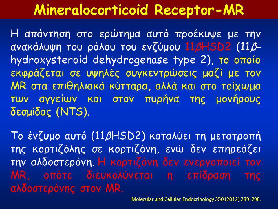 Η απάντηση στο ερώτημα αυτό προέκυψε με την ανακάλυψη του ρόλου του ενζύμου 11βHSD2 (11β- hydroxysteroid dehydrogenase type 2), το οποίο εκφράζεται σε