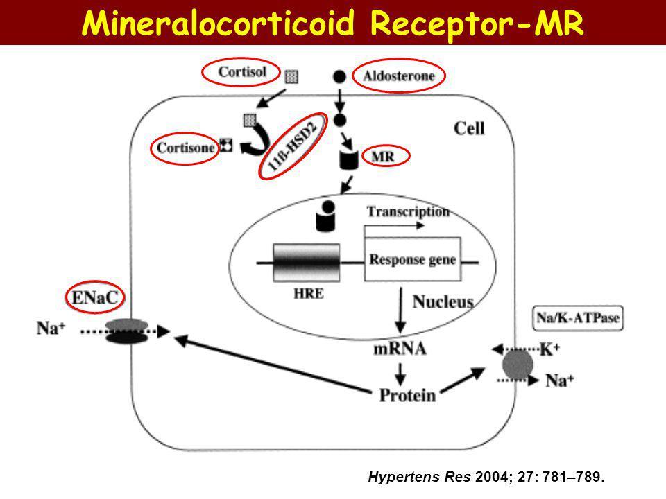 Hypertens Res 2004; 27: 781–789. Mineralocorticoid Receptor-MR