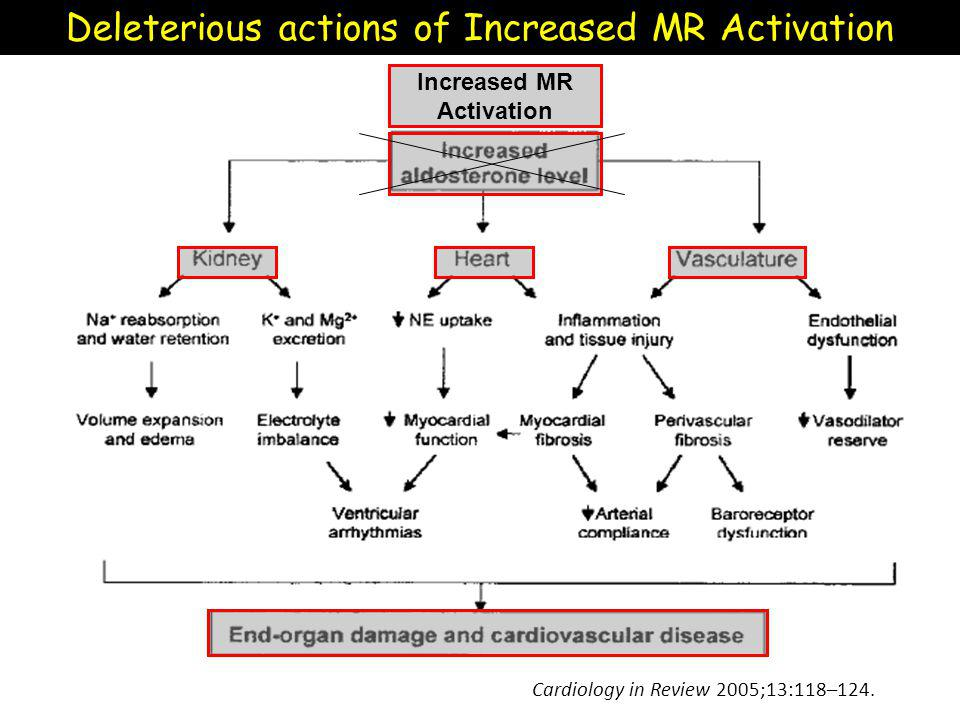 Cardiology in Review 2005;13:118–124. Deleterious actions of Increased MR Activation Increased MR Activation