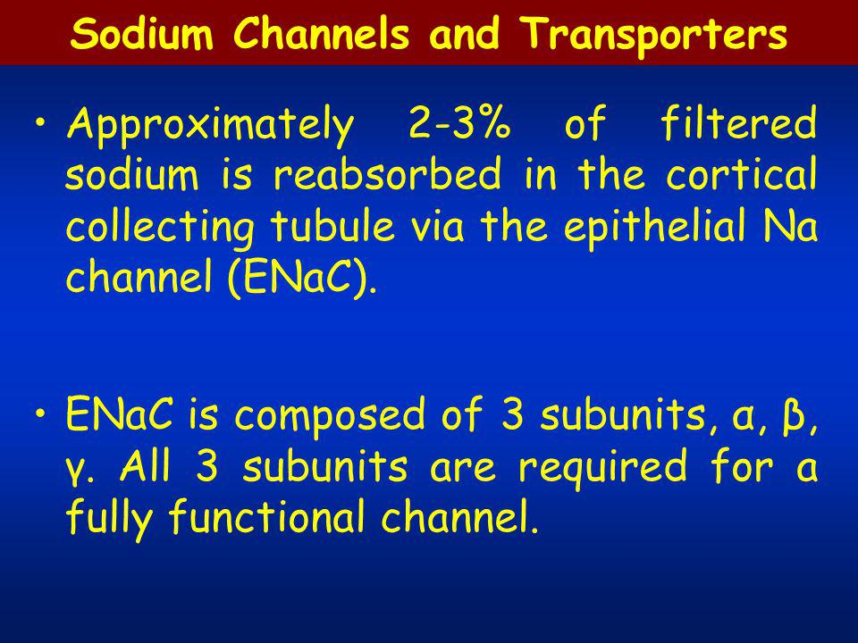 Sodium Channels and Transporters Approximately 2-3% of filtered sodium is reabsorbed in the cortical collecting tubule via the epithelial Na channel (