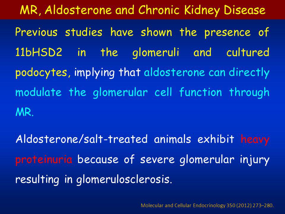 Previous studies have shown the presence of 11bHSD2 in the glomeruli and cultured podocytes, implying that aldosterone can directly modulate the glome