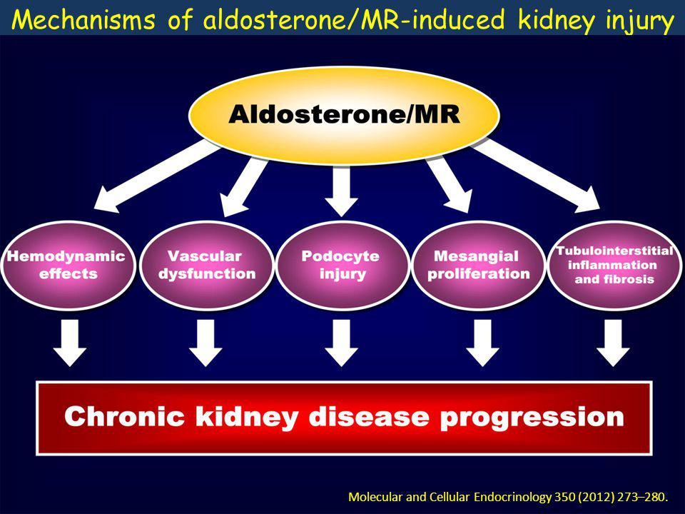 Mechanisms of aldosterone/MR-induced kidney injury Molecular and Cellular Endocrinology 350 (2012) 273–280.
