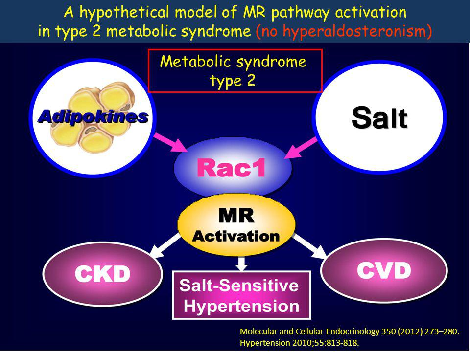 Molecular and Cellular Endocrinology 350 (2012) 273–280. Hypertension 2010;55:813-818. A hypothetical model of MR pathway activation in type 2 metabol