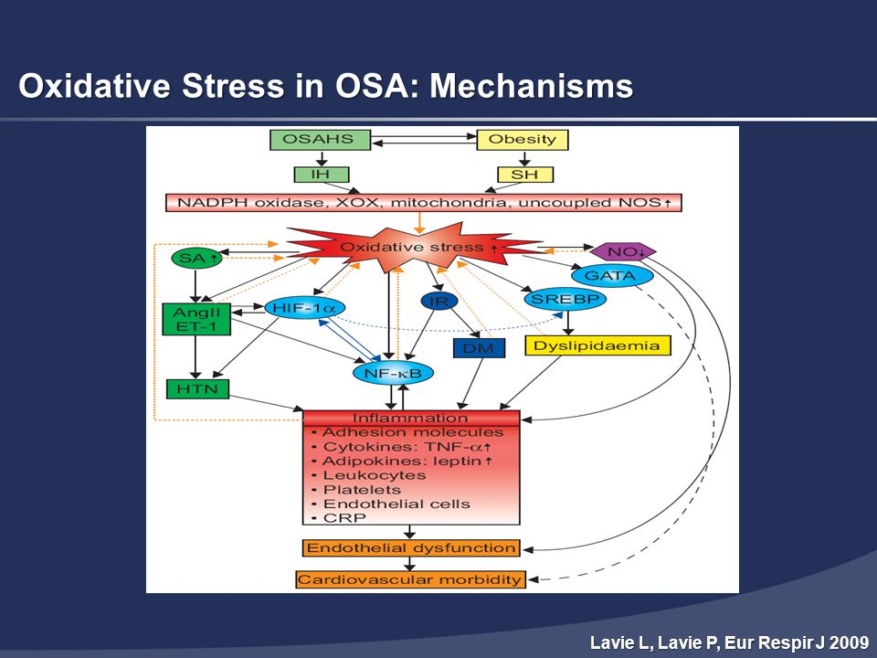 Oxidative Stress in OSA: Mechanisms Lavie L, Lavie P, Eur Respir J 2009