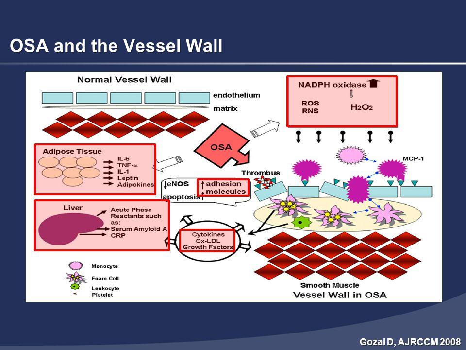 OSA and Cardiovascular Disease Ryan S, Thorax 2009