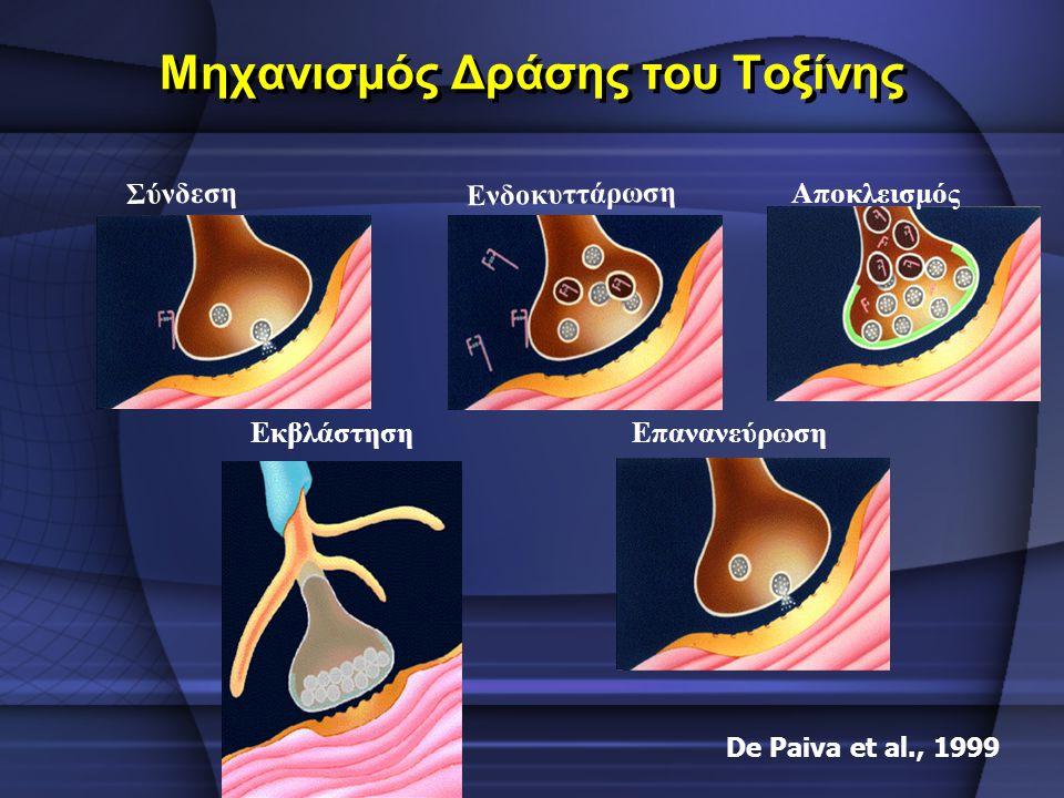 Μηχανισμός Δράσης του Τοξίνης Σύνδεση Ενδοκυττάρωση Αποκλεισμός ΕπανανεύρωσηΕκβλάστηση De Paiva et al., 1999