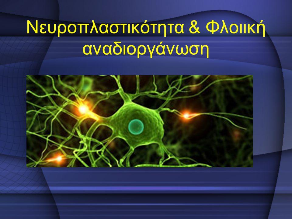 Νευροπλαστικότητα & Φλοιική αναδιοργάνωση