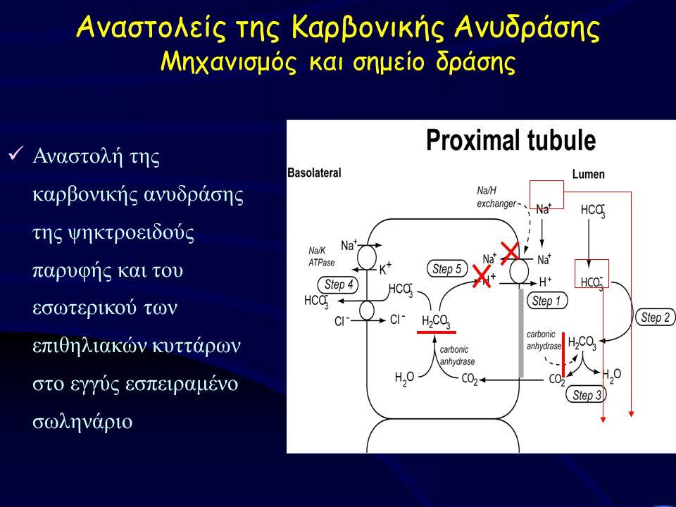 Αναστολείς της Καρβονικής Ανυδράσης Μηχανισμός και σημείο δράσης Αναστολή της καρβονικής ανυδράσης της ψηκτροειδούς παρυφής και του εσωτερικού των επιθηλιακών κυττάρων στο εγγύς εσπειραμένο σωληνάριο