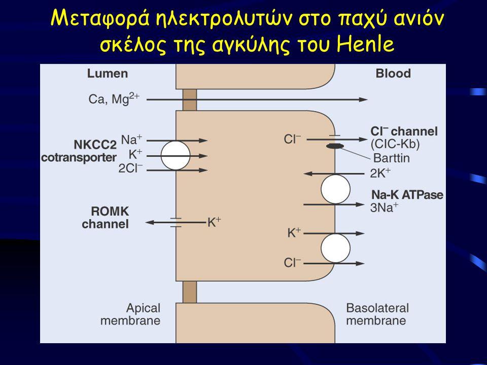 Μεταφορά ηλεκτρολυτών στο παχύ ανιόν σκέλος της αγκύλης του Henle