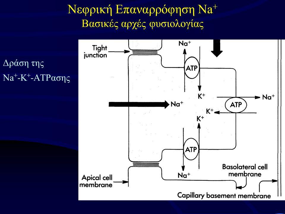 Δράση της Na + -K + -ΑTPασης Νεφρική Επαναρρόφηση Na + Βασικές αρχές φυσιολογίας