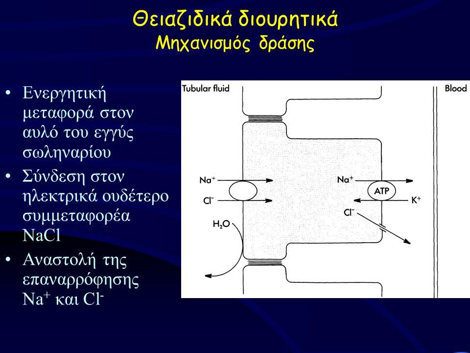 Ενεργητική μεταφορά στον αυλό του εγγύς σωληναρίου Σύνδεση στον ηλεκτρικά ουδέτερο συμμεταφορέα NaCl Αναστολή της επαναρρόφησης Na + και Cl - Θειαζιδικά διουρητικά Μηχανισμός δράσης