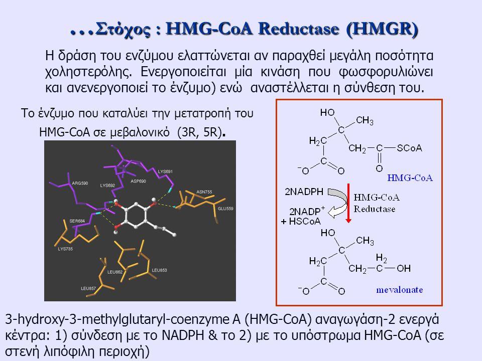 … Στόχος : HMG-CoA Reductase (HMGR) Το ένζυμο που καταλύει την μετατροπή του HMG-CoA σε μεβαλονικό (3R, 5R). 3-hydroxy-3-methylglutaryl-coenzyme A (HM