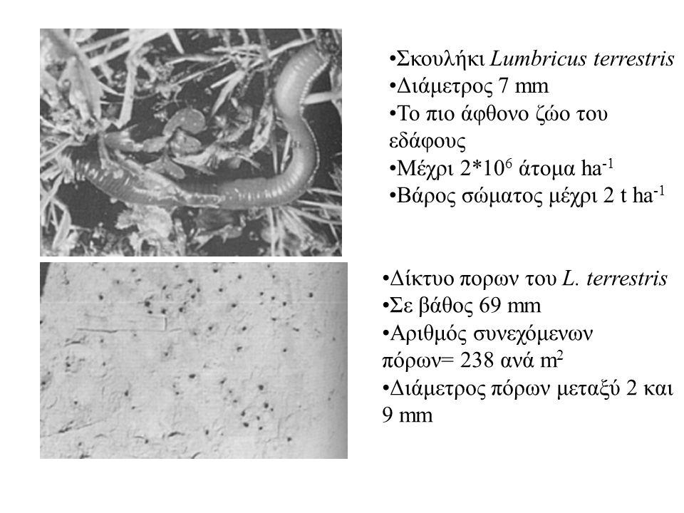 Σκουλήκι Lumbricus terrestris Διάμετρος 7 mm Το πιο άφθονο ζώο του εδάφους Μέχρι 2*10 6 άτομα ha -1 Βάρος σώματος μέχρι 2 t ha -1 Δίκτυο πορων του L.