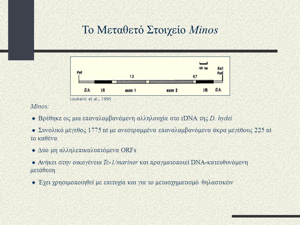 Minos: Βρέθηκε ως μια επαναλαμβανόμενη αλληλουχία στο rDNA της D. hydei Συνολικό μέγεθος 1775 nt με ανεστραμμένα επαναλαμβανόμενα άκρα μεγέθους 225 nt