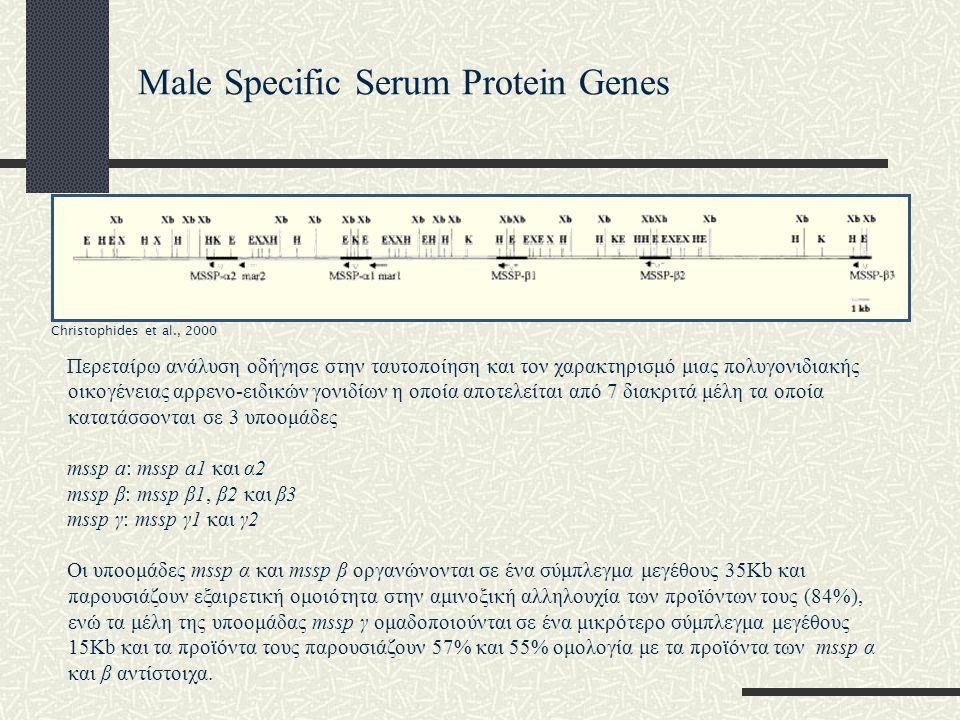 Περεταίρω ανάλυση οδήγησε στην ταυτοποίηση και τον χαρακτηρισμό μιας πολυγονιδιακής οικογένειας αρρενο-ειδικών γονιδίων η οποία αποτελείται από 7 διακριτά μέλη τα οποία κατατάσσονται σε 3 υποομάδες mssp a: mssp a1 και α2 mssp β: mssp β1, β2 και β3 mssp γ: mssp γ1 και γ2 Οι υποομάδες mssp α και mssp β οργανώνονται σε ένα σύμπλεγμα μεγέθους 35Κb και παρουσιάζουν εξαιρετική ομοιότητα στην αμινοξική αλληλουχία των προϊόντων τους (84%), ενώ τα μέλη της υποομάδας mssp γ ομαδοποιούνται σε ένα μικρότερο σύμπλεγμα μεγέθους 15Κb και τα προϊόντα τους παρουσιάζουν 57% και 55% ομολογία με τα προϊόντα των mssp α και β αντίστοιχα.