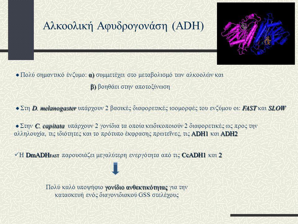 Αλκοολική Αφυδρογονάση (ADH) α) Πολύ σημαντικό ένζυμο: α) συμμετέχει στο μεταβολισμό των αλκοολών και β) β) βοηθάει στην αποτοξίνωση D. melanogasterFA