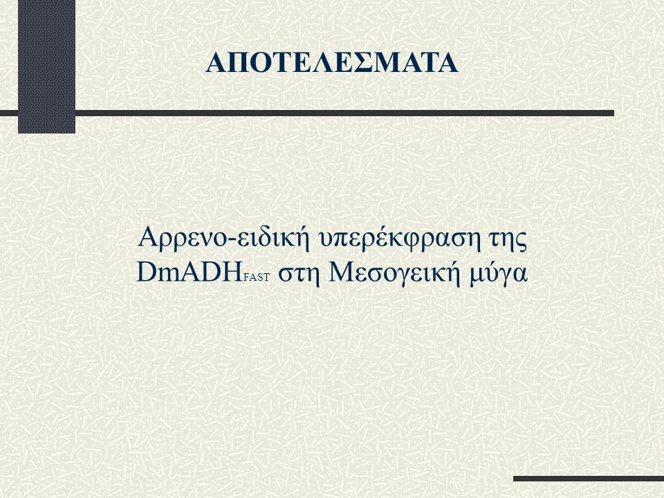Αρρενο-ειδική υπερέκφραση της DmADH FAST στη Μεσογεική μύγα ΑΠΟΤΕΛΕΣΜΑΤΑ
