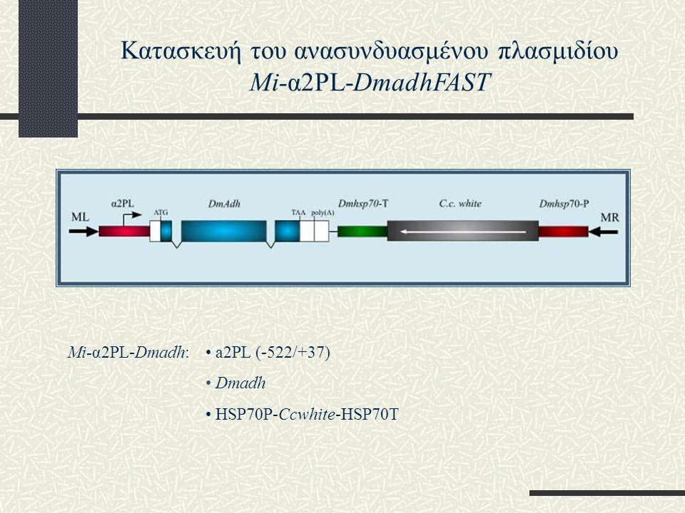 Κατασκευή του ανασυνδυασμένου πλασμιδίου Mi-α2PL-DmadhFAST Μi-α2PL-Dmadh: a2PL (-522/+37) Dmadh HSP70P-Ccwhite-HSP70T
