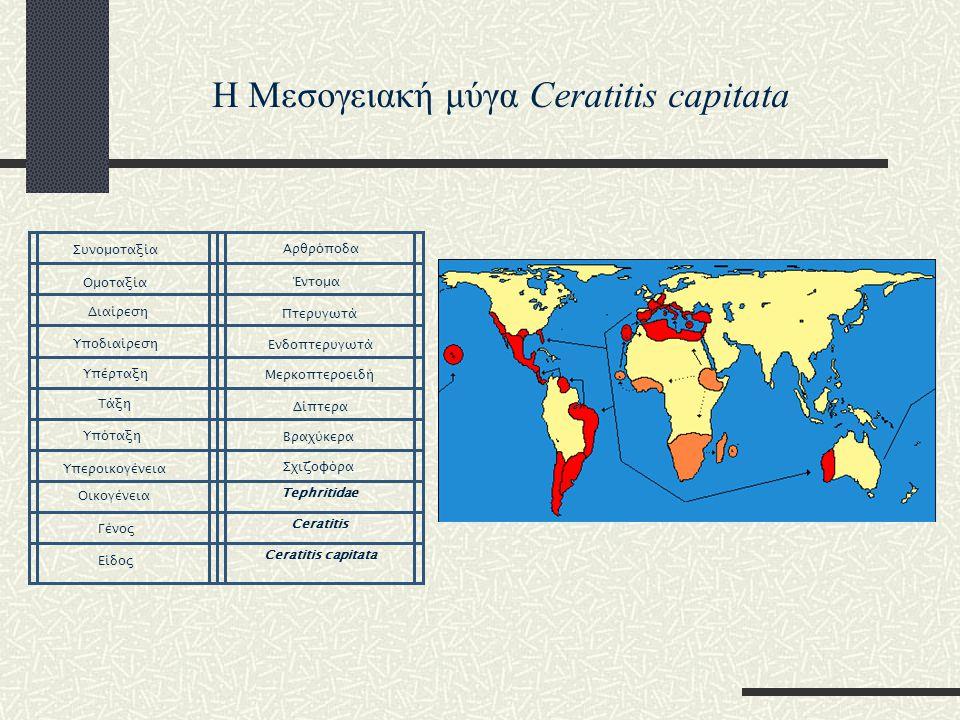 Tephritidae Ceratitis Ceratitis capitata Είδος Γένος Οικογένεια Υπεροικογένεια Υπόταξη Τάξη Υπέρταξη Υποδιαίρεση Διαίρεση Ομοταξία Συνομοταξία Αρθρόπο