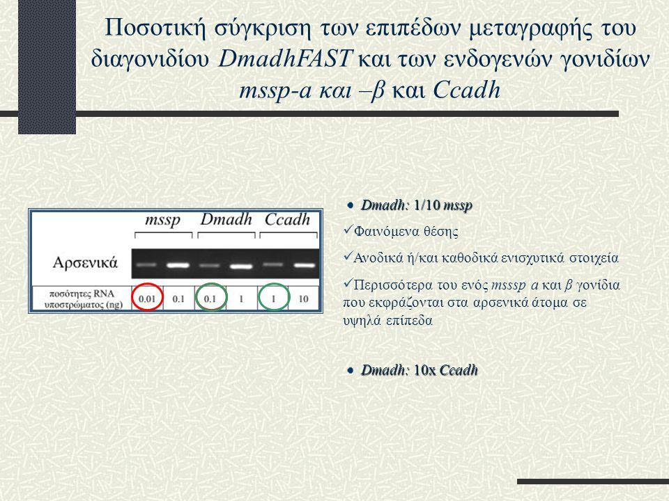Dmadh: 1/10 mssp Φαινόμενα θέσης Ανοδικά ή/και καθοδικά ενισχυτικά στοιχεία Περισσότερα του ενός msssp a και β γονίδια που εκφράζονται στα αρσενικά άτομα σε υψηλά επίπεδα Ποσοτική σύγκριση των επιπέδων μεταγραφής του διαγονιδίου DmadhFAST και των ενδογενών γονιδίων mssp-a και –β και Ccadh Dmadh: 10x Ccadh