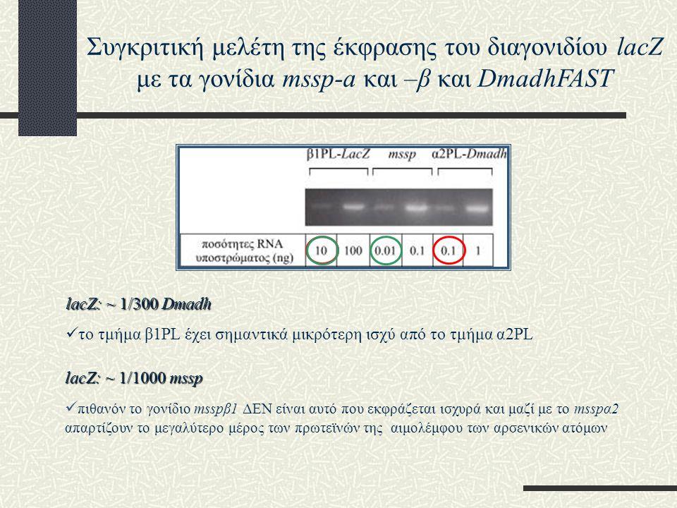 Συγκριτική μελέτη της έκφρασης του διαγονιδίου lacZ με τα γονίδια mssp-a και –β και DmadhFAST lacZ: ~ 1/300 Dmadh το τμήμα β1PL έχει σημαντικά μικρότερη ισχύ από το τμήμα α2PL lacZ: ~ 1/1000 mssp πιθανόν το γονίδιο msspβ1 ΔΕΝ είναι αυτό που εκφράζεται ισχυρά και μαζί με το msspα2 απαρτίζουν το μεγαλύτερο μέρος των πρωτεϊνών της αιμολέμφου των αρσενικών ατόμων