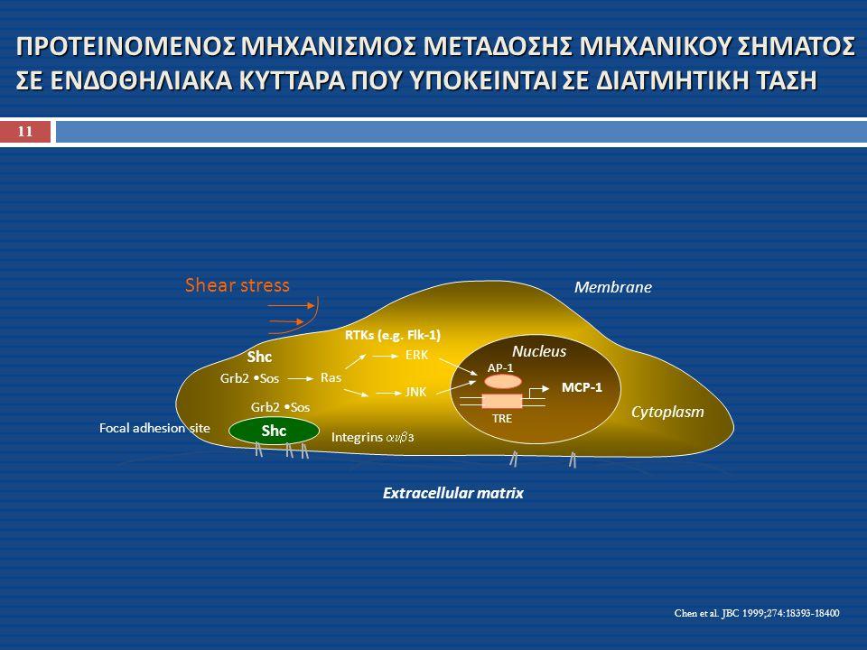 ΠΡΟΤΕΙΝΟΜΕΝΟΣ ΜΗΧΑΝΙΣΜΟΣ ΜΕΤΑΔΟΣΗΣ ΜΗΧΑΝΙΚΟΥ ΣΗΜΑΤΟΣ ΣΕ ΕΝΔΟΘΗΛΙΑΚΑ ΚΥΤΤΑΡΑ ΠΟΥ ΥΠΟΚΕΙΝΤΑΙ ΣΕ ΔΙΑΤΜΗΤΙΚΗ ΤΑΣΗ Shear stress Membrane Cytoplasm Nucleus Focal adhesion site Integrins   3 Extracellular matrix Shc Grb2 Sos Shc RTKs (e.g.