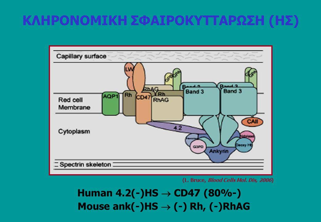 Human 4.2(-)HS  CD47 (80%-) (L. Bruce, Blood Cells Mol. Dis, 2006) Mouse ank(-)HS  (-) Rh, (-)RhAG ΚΛΗΡΟΝΟΜΙΚΗ ΣΦΑΙΡΟΚΥΤΤΑΡΩΣΗ (ΗΣ)
