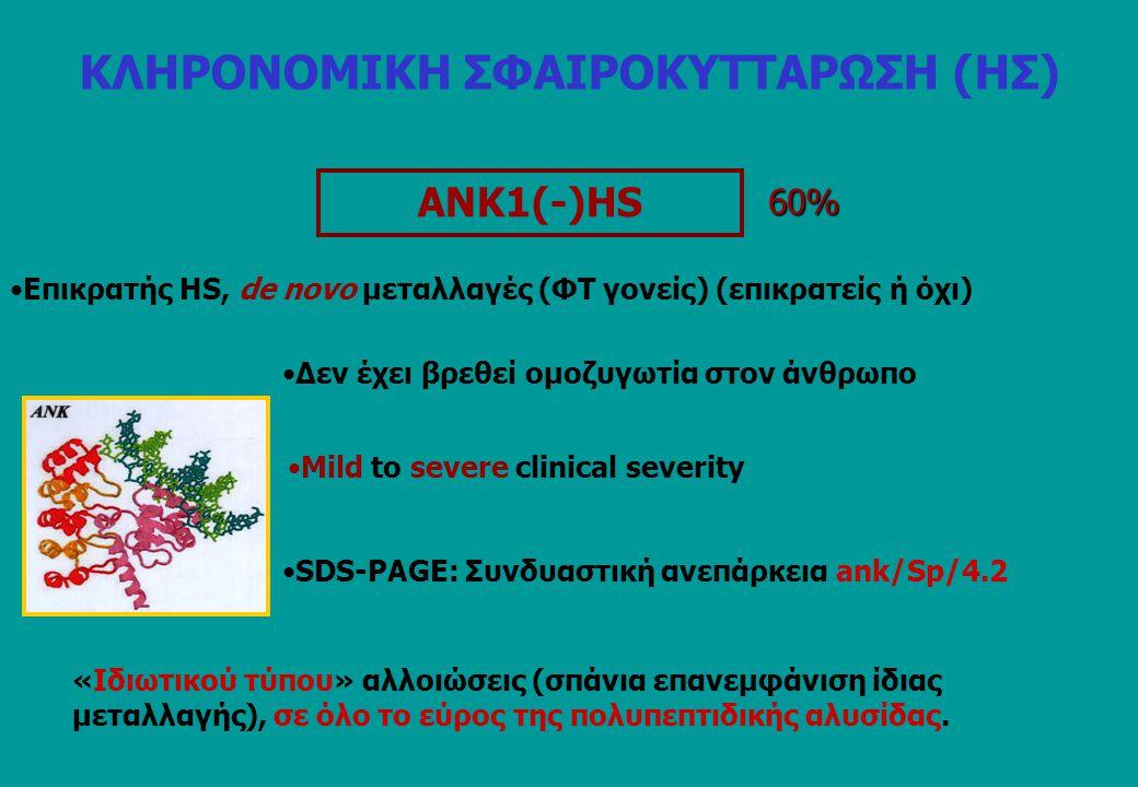 ANK1(-)HS 60% Επικρατής HS, de novo μεταλλαγές (ΦΤ γονείς) (επικρατείς ή όχι) Mild to severe clinical severity SDS-PAGE: Συνδυαστική ανεπάρκεια ank/Sp/4.2 «Ιδιωτικού τύπου» αλλοιώσεις (σπάνια επανεμφάνιση ίδιας μεταλλαγής), σε όλο το εύρος της πολυπεπτιδικής αλυσίδας.