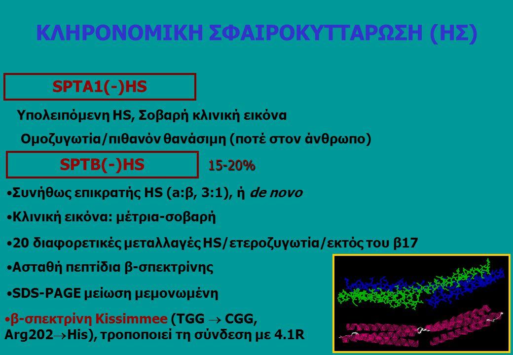 SPTΑ1(-)HS Υπολειπόμενη HS, Σοβαρή κλινική εικόνα Ομοζυγωτία/πιθανόν θανάσιμη (ποτέ στον άνθρωπο) SPTB(-)HS 15-20% 20 διαφορετικές μεταλλαγές HS/ετερο