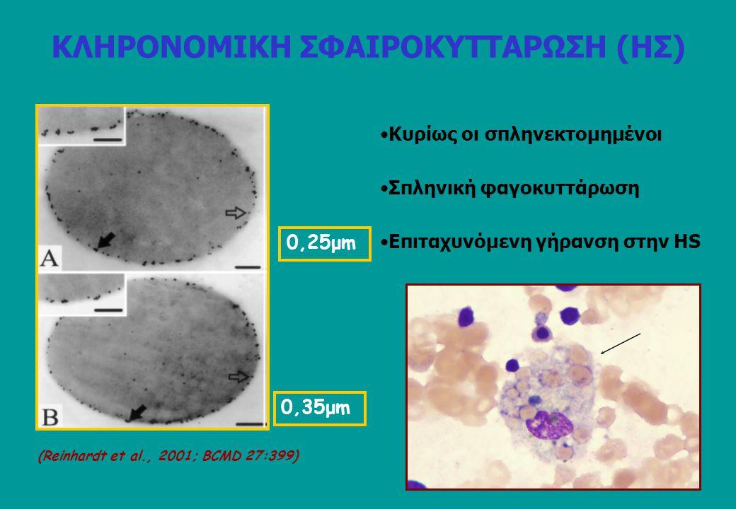 0,25μm 0,35μm (Reinhardt et al., 2001; BCMD 27:399) Eπιταχυνόμενη γήρανση στην HS Κυρίως οι σπληνεκτομημένοι Σπληνική φαγοκυττάρωση ΚΛΗΡΟΝΟΜΙΚΗ ΣΦΑΙΡΟ