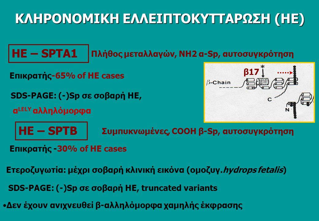 ΗΕ – SPTA1 Επικρατής-65% of HE cases SDS-PAGE: (-)Sp σε σοβαρή ΗΕ, Πλήθος μεταλλαγών, ΝΗ2 α-Sp, αυτοσυγκρότηση ΗΕ – SPTΒ Συμπυκνωμένες, COOH β-Sp, αυτοσυγκρότηση α LELY αλληλόμορφα Επικρατής -30% of HE cases Ετεροζυγωτία: μέχρι σοβαρή κλινική εικόνα (ομοζυγ.hydrops fetalis) SDS-PAGE: (-)Sp σε σοβαρή ΗΕ, truncated variants β17 Δεν έχουν ανιχνευθεί β-αλληλόμορφα χαμηλής έκφρασης ΚΛΗΡΟΝΟΜΙΚΗ ΕΛΛΕΙΠΤΟΚΥΤΤΑΡΩΣΗ (ΗΕ)