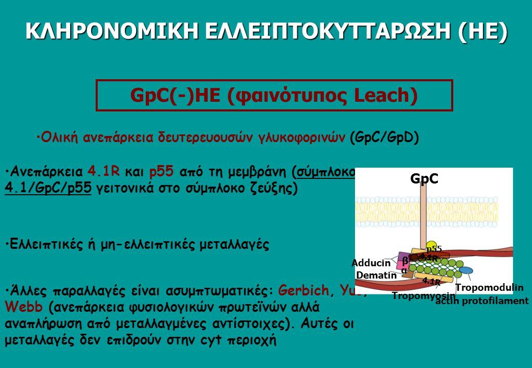 GpC(-)HE (φαινότυπος Leach) Aνεπάρκεια 4.1R και p55 από τη μεμβράνη (σύμπλοκο 4.1/GpC/p55 γειτονικά στο σύμπλοκο ζεύξης) Ολική ανεπάρκεια δευτερευουσών γλυκοφορινών (GpC/GpD) Ελλειπτικές ή μη-ελλειπτικές μεταλλαγές Άλλες παραλλαγές είναι ασυμπτωματικές: Gerbich, Yus, Webb (ανεπάρκεια φυσιολογικών πρωτεϊνών αλλά αναπλήρωση από μεταλλαγμένες αντίστοιχες).
