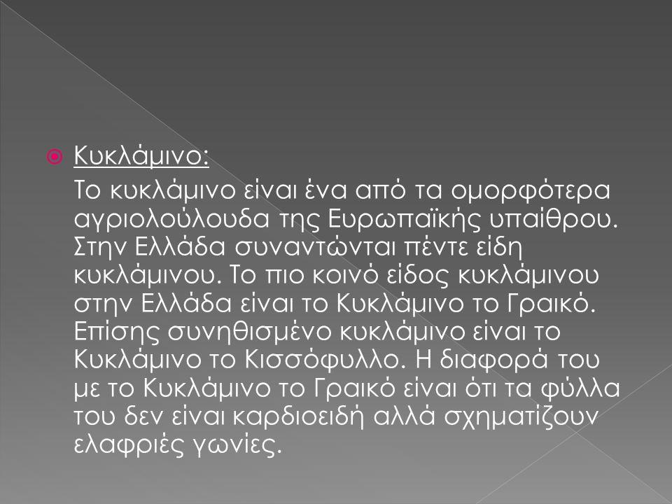  Κυκλάμινο: Το κυκλάμινο είναι ένα από τα ομορφότερα αγριολούλουδα της Ευρωπαϊκής υπαίθρου.