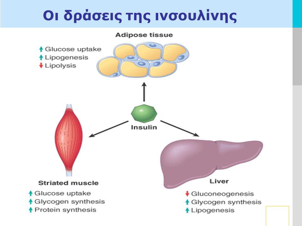 Οι δράσεις της ινσουλίνης