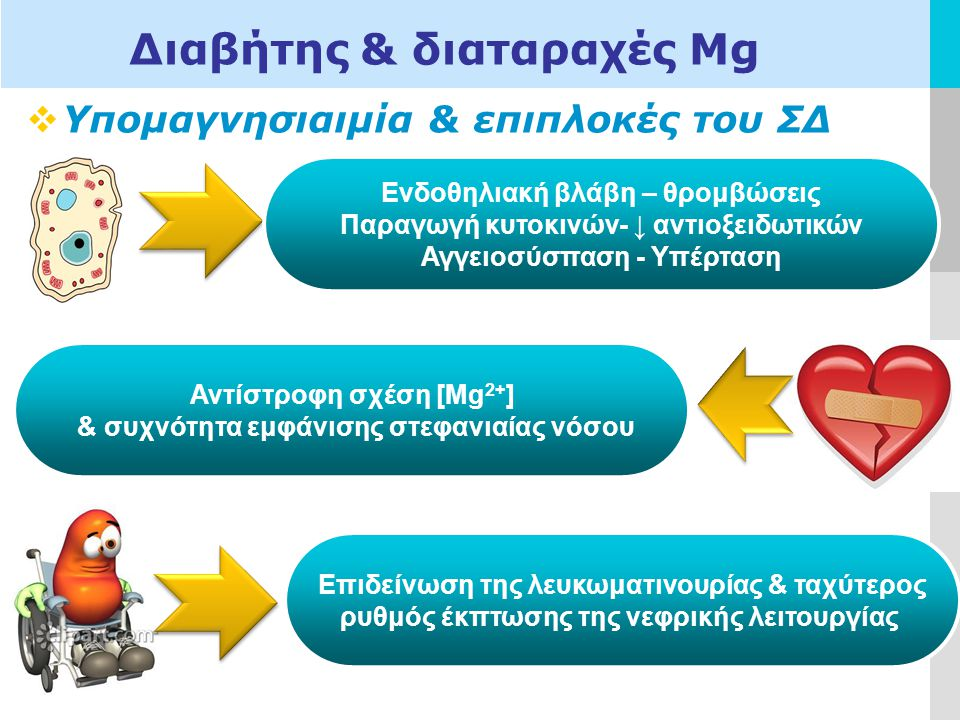 LOGO  Υπομαγνησιαιμία & επιπλοκές του ΣΔ Διαβήτης & διαταραχές Μg Αντίστροφη σχέση [Mg 2+ ] & συχνότητα εμφάνισης στεφανιαίας νόσου Ενδοθηλιακή βλάβη – θρομβώσεις Παραγωγή κυτοκινών- ↓ αντιοξειδωτικών Αγγειοσύσπαση - Υπέρταση Επιδείνωση της λευκωματινουρίας & ταχύτερος ρυθμός έκπτωσης της νεφρικής λειτουργίας