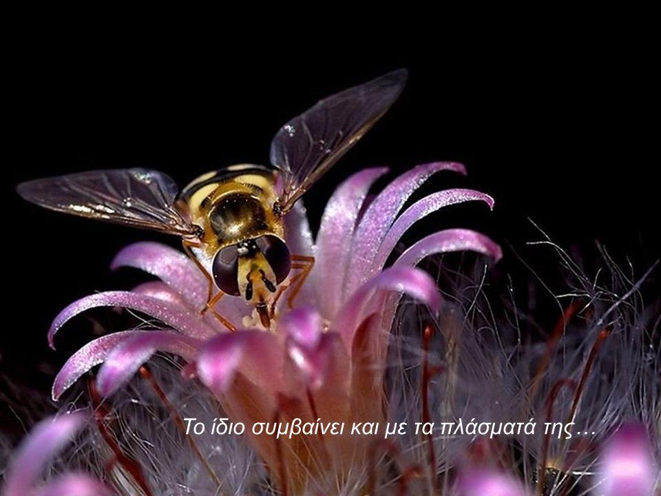 Με τα υπέροχα λουλούδια της…