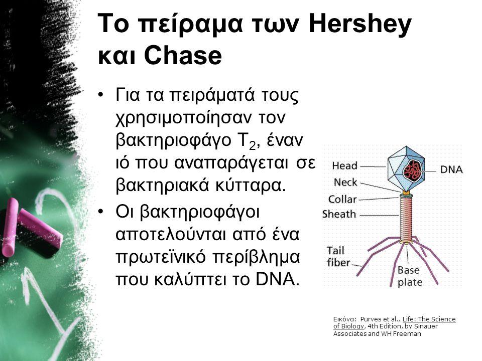 Alfred Hershey-Martha Chase Η οριστική επιβεβαίωση ότι το DNA αποτελεί το γενετικό υλικό των οργανισμών ήρθε το 1952 με τα πειράματα των Hershey-Chase