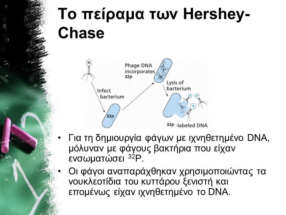 Συμπέρασμα: Διαπίστωσαν ότι το 35 S έμενε έξω από το κύτταρο ενώ το 32 Ρ περνούσε στο εσωτερικό. Επομένως: «ΤΟ DNA ΕΙΝΑΙ ΤΟ ΓΕΝΕΤΙΚΟ ΥΛΙΚΟ» Οριστική ε