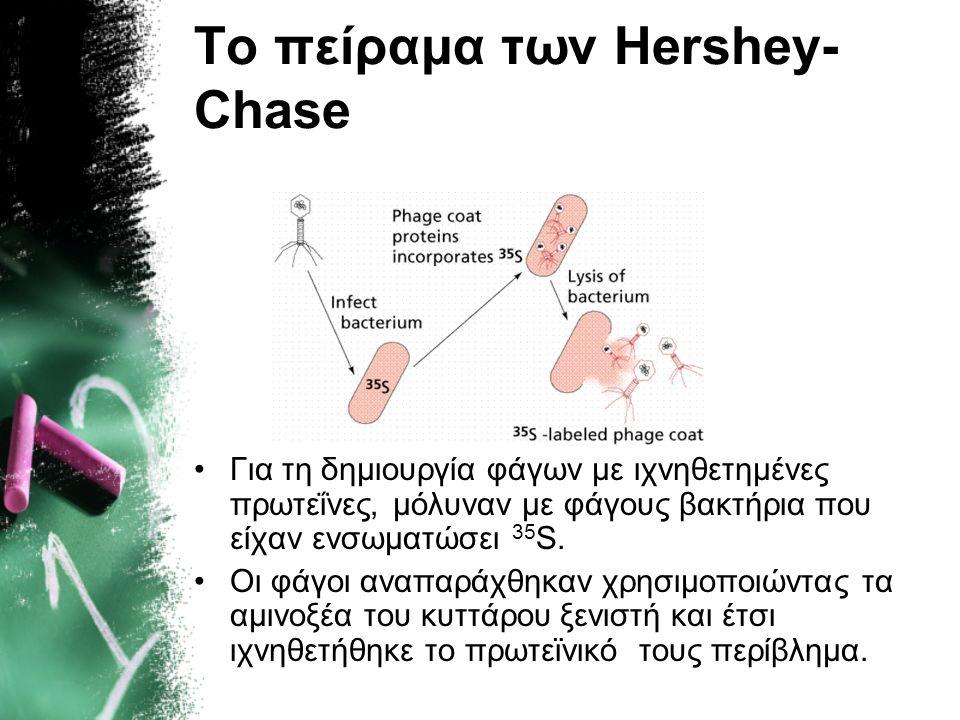 Το πείραμα των Hershey- Chase Για τη δημιουργία φάγων με ιχνηθετημένο DNA, μόλυναν με φάγους βακτήρια που είχαν ενσωματώσει 32 Ρ. Οι φάγοι αναπαράχθηκ