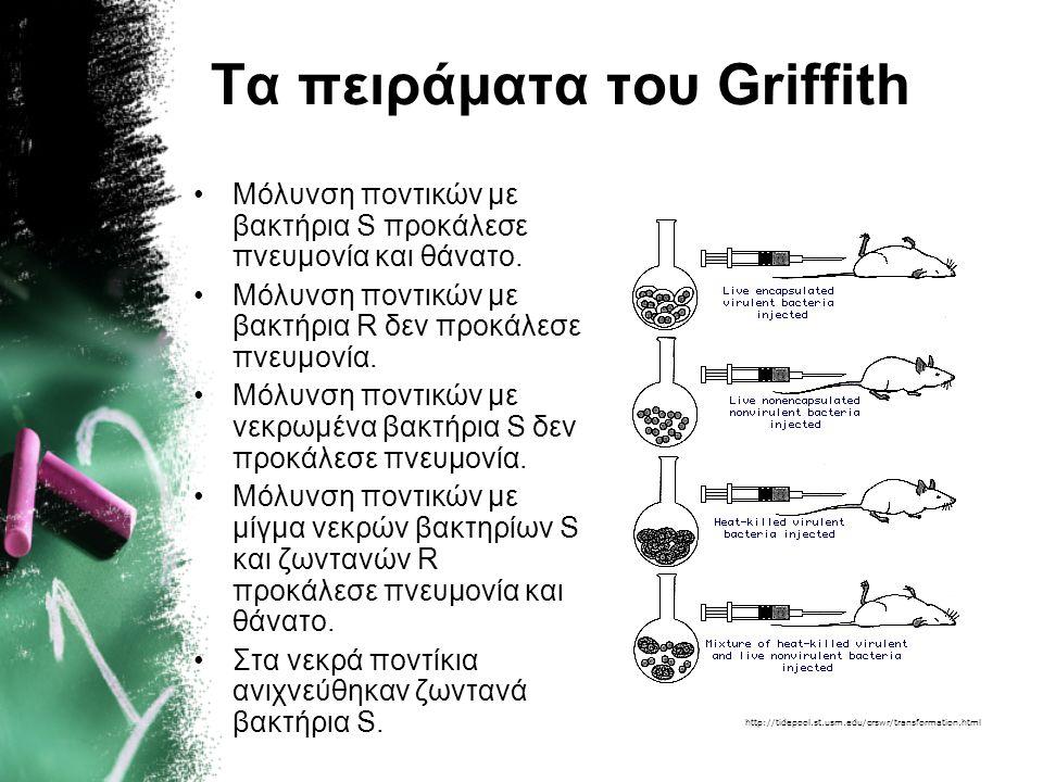 Frederick Griffith Ο Griffith μελέτησε τη διαφορά μεταξύ ενός στελέχους του βακτηρίου πνευμονιόκοκκος (Streptococcus pneumoniae) που προκαλεί πνευμονί