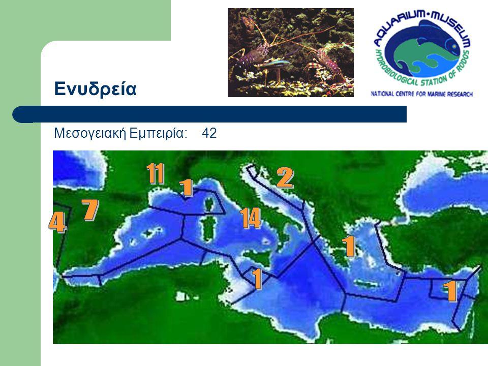 Ενυδρεία Μεσογειακή Εμπειρία: 42