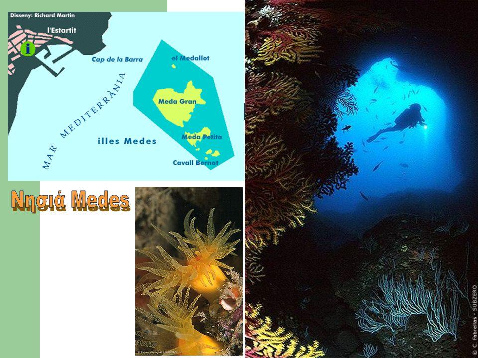 Θαλάσσια Πάρκα Μεγάλη ανάπτυξη / οργάνωση στην Καραϊβική και στην Αυστραλία Στόχος είναι ο καθορισμός ζωνών που θα: προστατεύουν την χλωρίδα και την πανίδα επιτρέπουν ήπιες δραστηριότητες αναψυχής και αλιείας Αδυναμίες (MONO το 5% του Great Barrier Reef ΠΡΟΣΤΑΤΕΥΕΤΑΙ !!) Στρατηγική ήπιας ανάπτυξης (στόχος και μέσα) Κατανομή ευθυνών διαχείρισης (συμμετοχή ενδιαφερόμενων) Ζωνο-ποίηση περιοχών και χρήσεις Εφαρμογή στρατηγικής