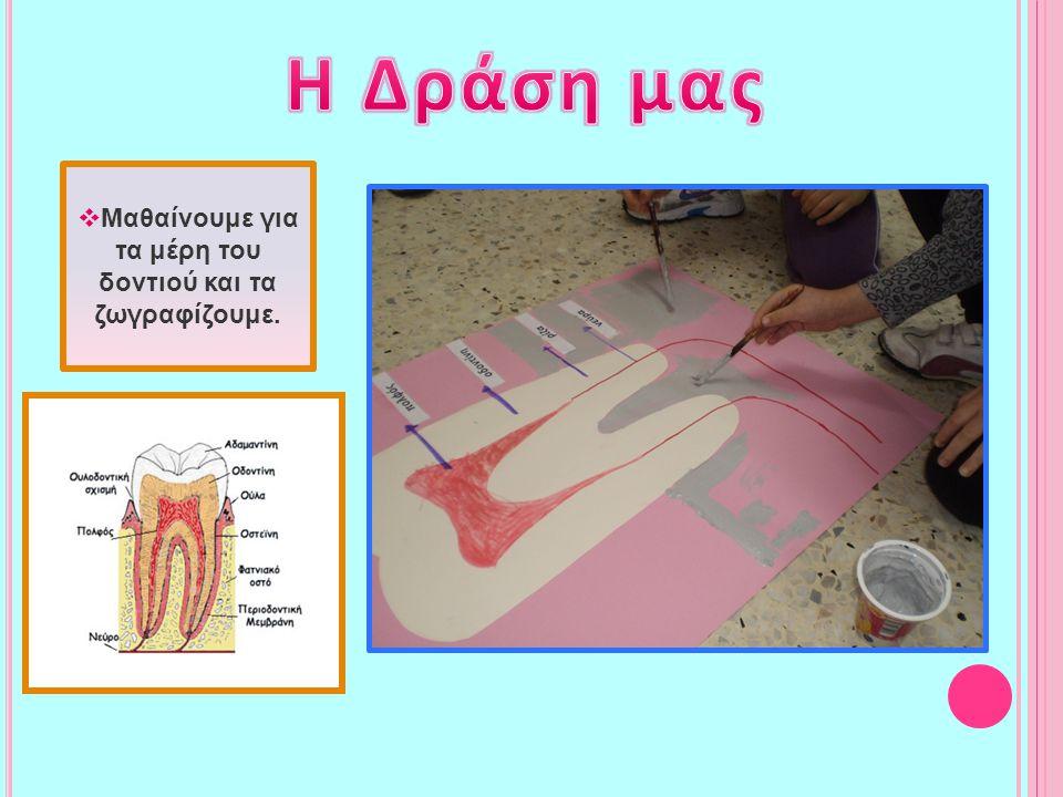  Μαθαίνουμε για τα μέρη του δοντιού και τα ζωγραφίζουμε.