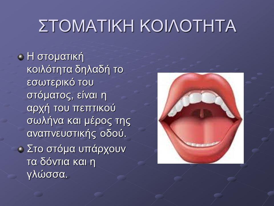 ΣΤΟΜΑΤΙΚΗ ΚΟΙΛΟΤΗΤΑ Η στοματική κοιλότητα δηλαδή το εσωτερικό του στόματος, είναι η αρχή του πεπτικού σωλήνα και μέρος της αναπνευστικής οδού. Στο στό