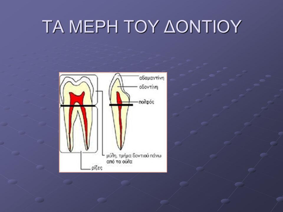 ΤΙ ΣΗΜΑΙΝΕΙ ΣΤΟΜΑΤΙΚΗ ΥΓΙΕΙΝΗ Στοματική υγιεινή σημαίνει κυρίως καθημερινή φροντίδα των δοντιών.