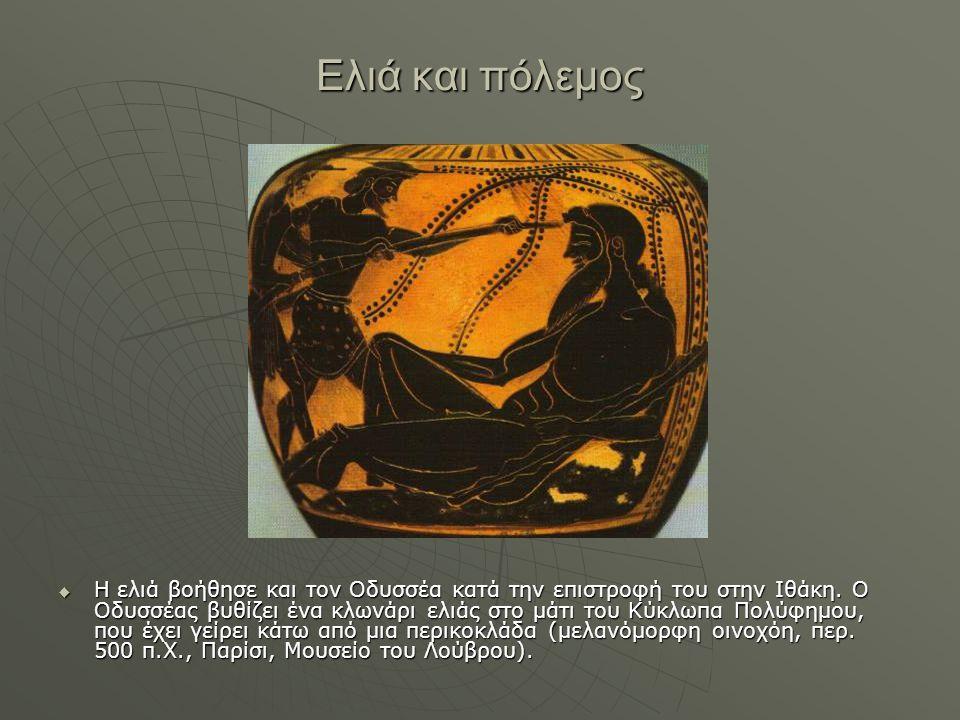 Ελιά και πόλεμος  Η ελιά βοήθησε και τον Οδυσσέα κατά την επιστροφή του στην Ιθάκη. Ο Οδυσσέας βυθίζει ένα κλωνάρι ελιάς στο μάτι του Κύκλωπα Πολύφημ