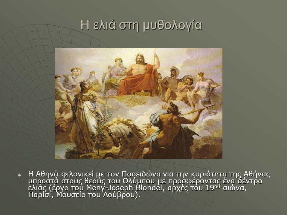 Η ελιά στη μυθολογία  Η Αθηνά φιλονικεί με τον Ποσειδώνα για την κυριότητα της Αθήνας μπροστά στους θεούς του Ολύμπου με προσφέροντας ένα δέντρο ελιά