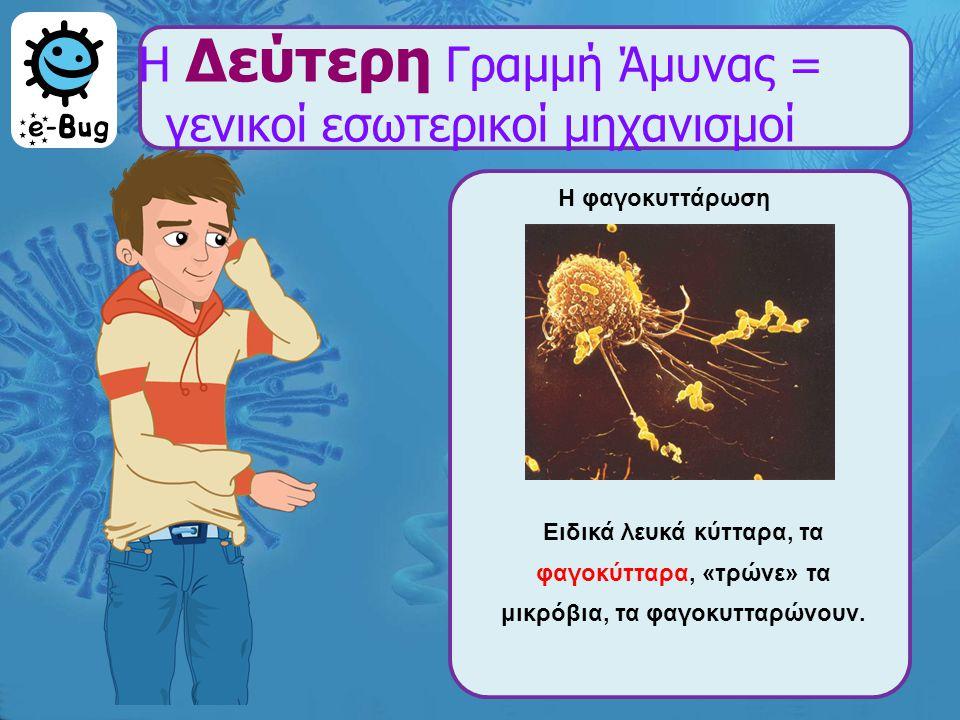 Η Δεύτερη Γραμμή Άμυνας = γενικοί εσωτερικοί μηχανισμοί Η φαγοκυττάρωση Ειδικά λευκά κύτταρα, τα φαγοκύτταρα, «τρώνε» τα μικρόβια, τα φαγοκυτταρώνουν.